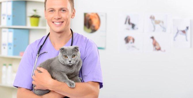 猫に去勢手術をオススメする理由