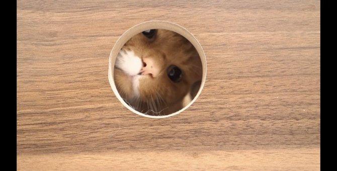 まん丸な穴から覗く猫ちゃんのまん丸なお顔が可愛い♡