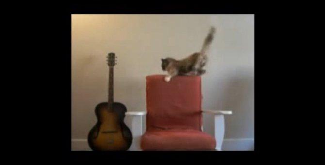 ゆらゆら不安定だけど座りたい!ロッキングチェアに悪戦苦闘する猫ちゃん