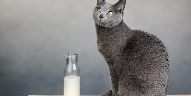 猫にミルクを与える時の方法と注意点とは