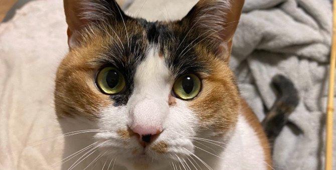『猫と暮らして学んだこと』ランキングTOP5!愛猫から得た大切な教えとは?