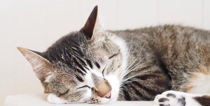 寝たきりになった老猫の介護に役立つグッズ4選