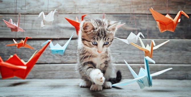 猫の遊び場を作ろう!オシャレに作るための3つのコツ