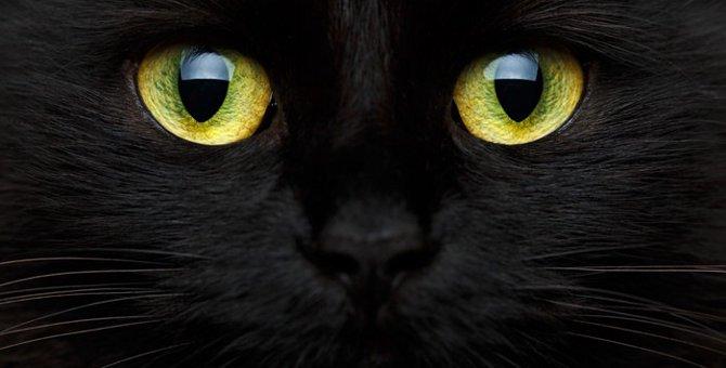 実は福を呼ぶ猫だった!?黒猫が「不吉」と言われる所以と真実