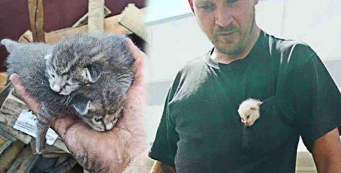 ゴミ箱に遺棄された4匹の子猫…救出活動の行方は?
