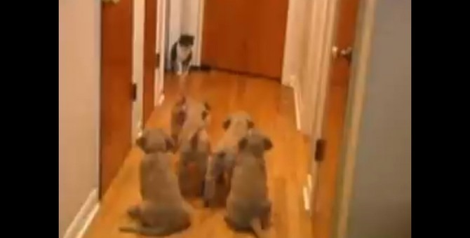 猫が怖い!子犬軍団1匹の猫ちゃんに悪戦苦闘!