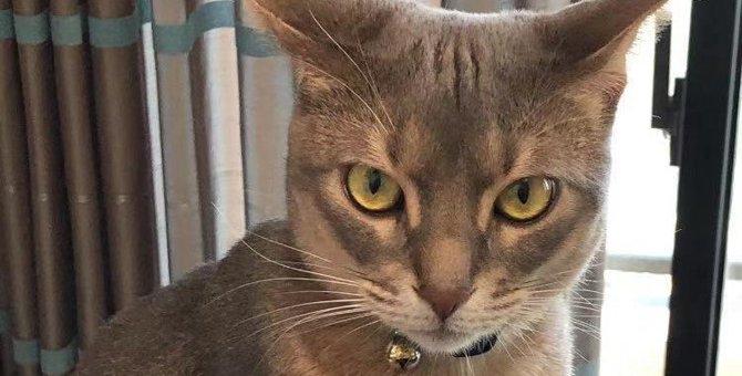 猫の『ティッキング』ってなに?該当する猫種4つと毛色にまつわる豆知識を紹介!