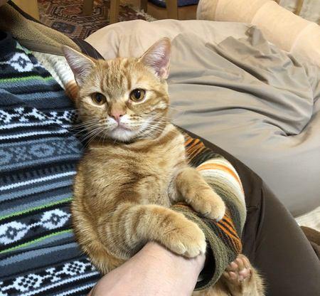 抱っこ嫌いな猫への対処法4つ