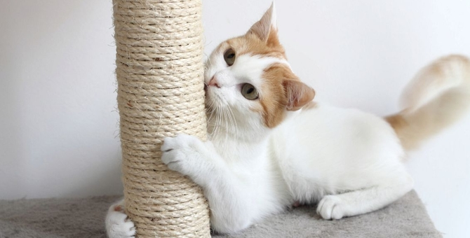 猫が爪とぎをする理由について 対策と防止グッズ