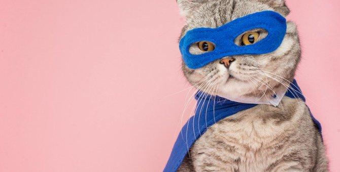 【救世主はにゃんこ】猫が人間の命を救った7つのエピソード