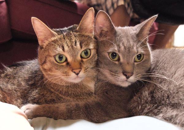 知ってる?『和猫』と『洋猫』の違い3つ