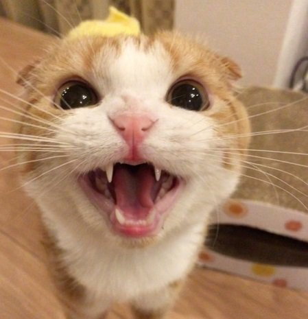 猫は飼い主の帰宅が分かる!?いつも玄関にいる7つの心理