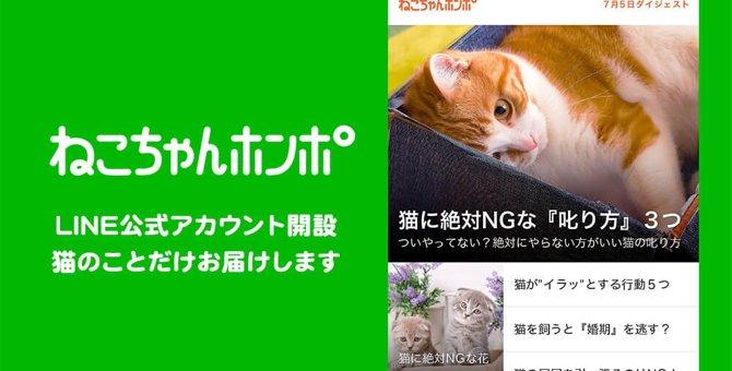 ねこちゃんホンポのLINE公式アカウントがオープンしました!【友だち登録】