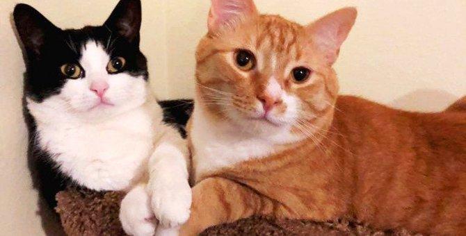 過酷な森の中で保護された2匹の子猫から学ぶこと