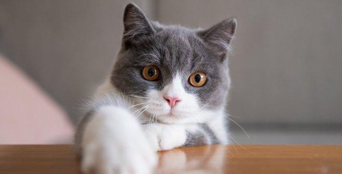 猫が『わがまま』になりやすいシチュエーション4つ