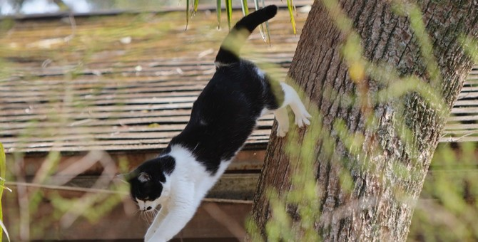 愛猫の危機一髪!「ドキッ」とした瞬間5つ