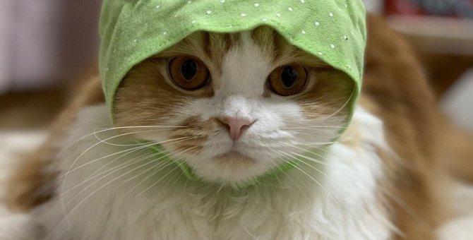 猫がごはんを食べない時に考えられる理由5つ