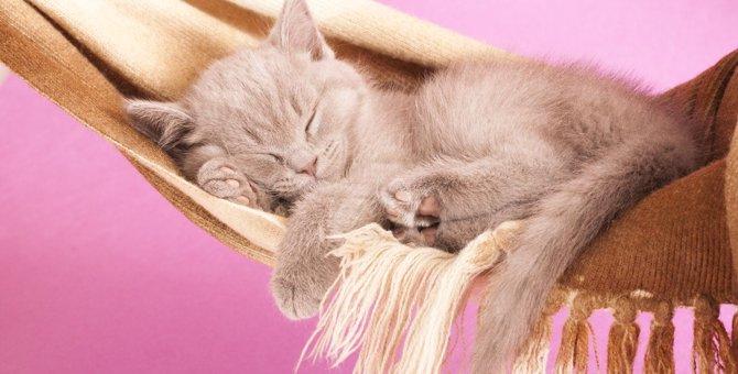 猫にとって『ベッド』『ハンモック』どっちが快適?メリットとデメリットを解説