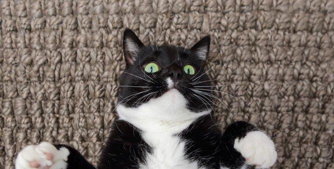 猫が元気なのにお腹の調子が悪い…原因や疑う病気とは?