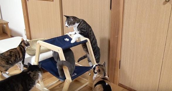 高いところが好きなんです☆ハンモックに登ろうとする猫たち!
