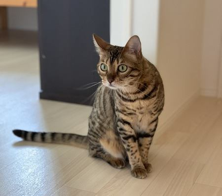 表現ベタな猫の気持ちをくみ取るためのポイント3つ
