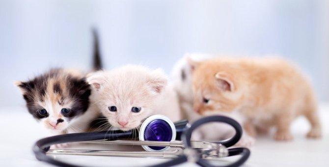 猫を夜間病院に連れていく前に!6つの準備をしておこう
