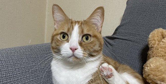 猫に『ソファ』で爪とぎされないための対策6選