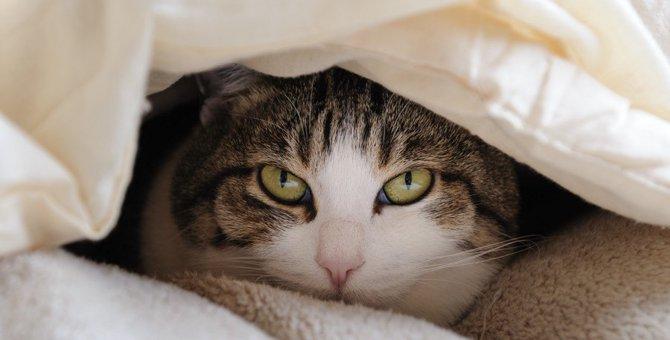 猫と一緒にコタツに入る時注意したい7つの事