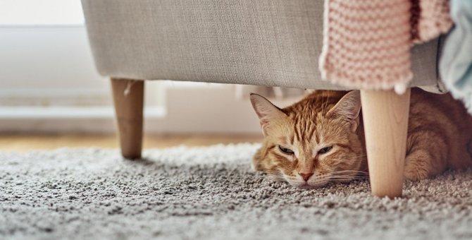 猫の留守番時に発生しやすい危険な事故5選!飼い主が絶対すべき予防策とは?