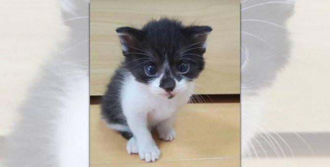 トイレより先に「カメラ目線覚えまちた♡」可愛いが過ぎる子猫ちゃん