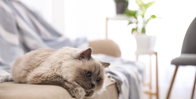 猫が『ぐったり』する4つの原因と病気を見極める方法