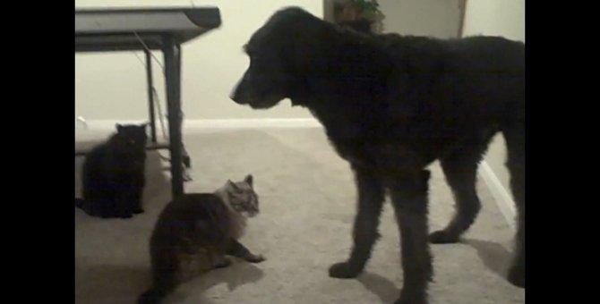 間違っちゃった犬と間違えられちゃった猫