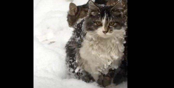 厳冬に耐えきれず命を失う猫も…居場所を失った13匹の猫の行く末は?