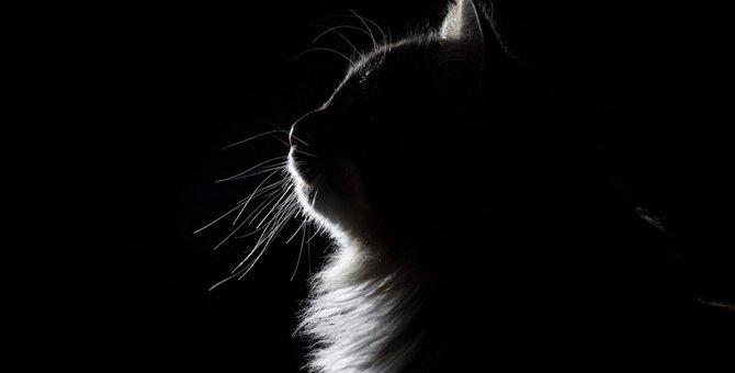 猫が『遠ざけたくなる人』がしているタブー行動3選