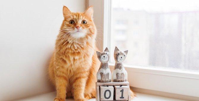 猫のカレンダー(卓上・壁掛け・壁紙)おすすめ10選!