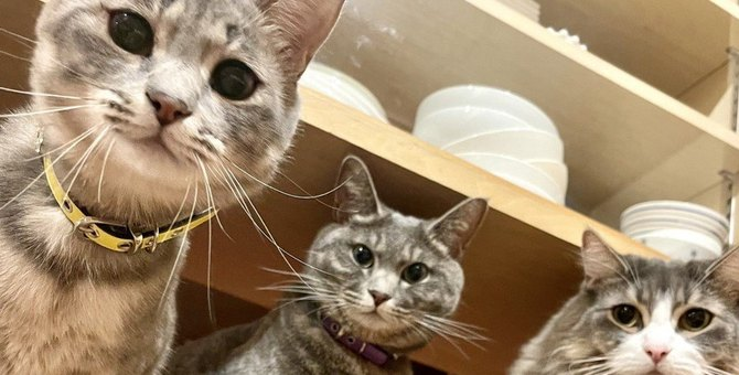 猫同士で『譲り合い』をしがちなシーン4つ