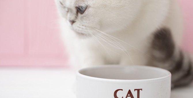 猫のフードボウルおすすめ20選!みんなが使ってる人気商品やおしゃれな物まで