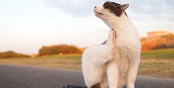 猫の皮膚炎の症状とその原因を探ろう