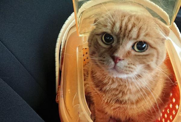 動物病院に行く猫のストレスを軽減する方法5つ