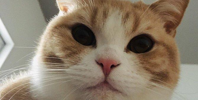 猫と暮らして『ギャップ萌え♡』すること4つ