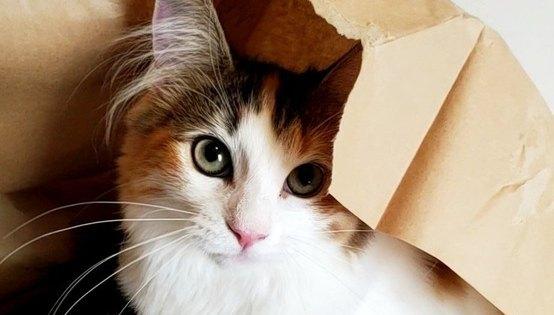 猫が「秘密基地」にしがちな場所5つ