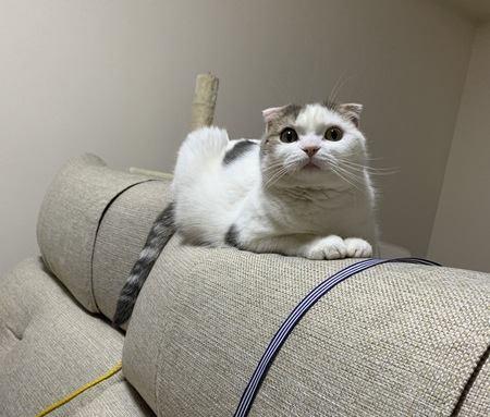 猫の座る位置でわかる心理5選!あなたの愛猫がどこに座ってるかチェックしてみて♪