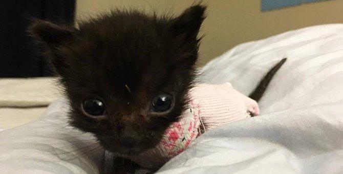 ゴミの中に遺棄されていた大きな頭と小さな体を持った子猫