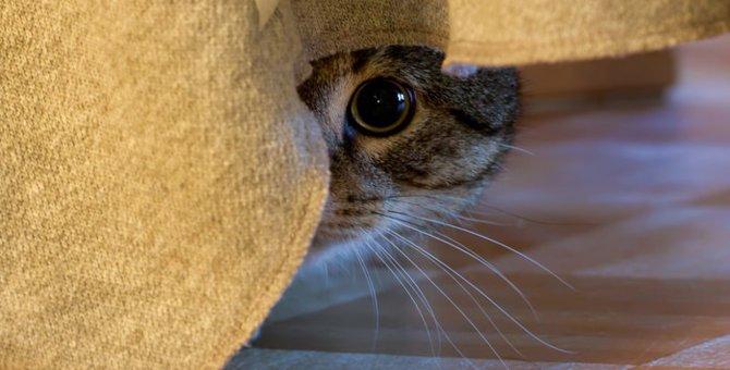 可愛い猫が豹変!?猫の「怖カワ顔」写真特集♪