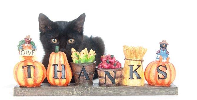 猫が飼い主に恩を感じる5つの事