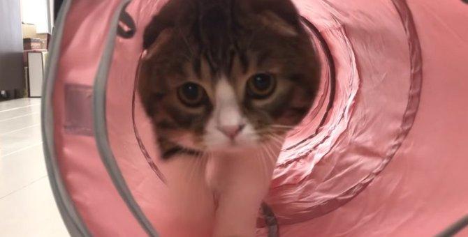 突進!!トンネル大好き猫さん!