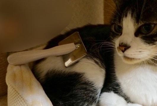 猫のトリミングを自宅で行う方法とサロンで行う注意点
