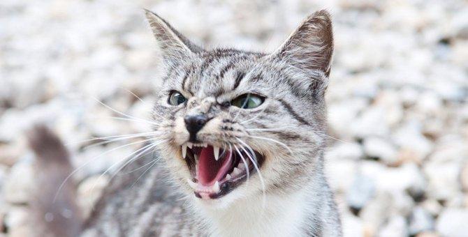 猫が怒った時の対策5つ