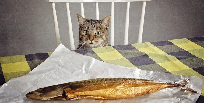 猫が好きな匂いと嫌いな匂いはどんなもの?