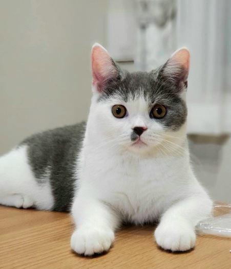 飼い主の目を見ているときの猫の気持ち4つ